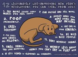dogs resolutions