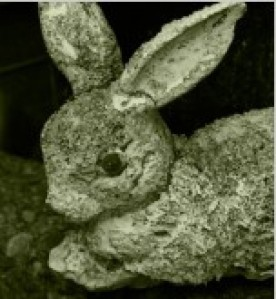 cropped-weathered_bunny_210505.jpg